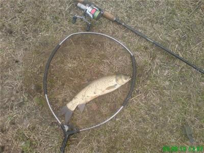 Возраст рыб