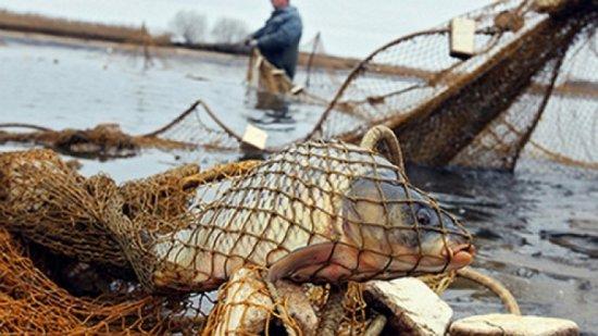 У супермаркети Києва вже не перший рік потрапляє риба з Чорнобиля